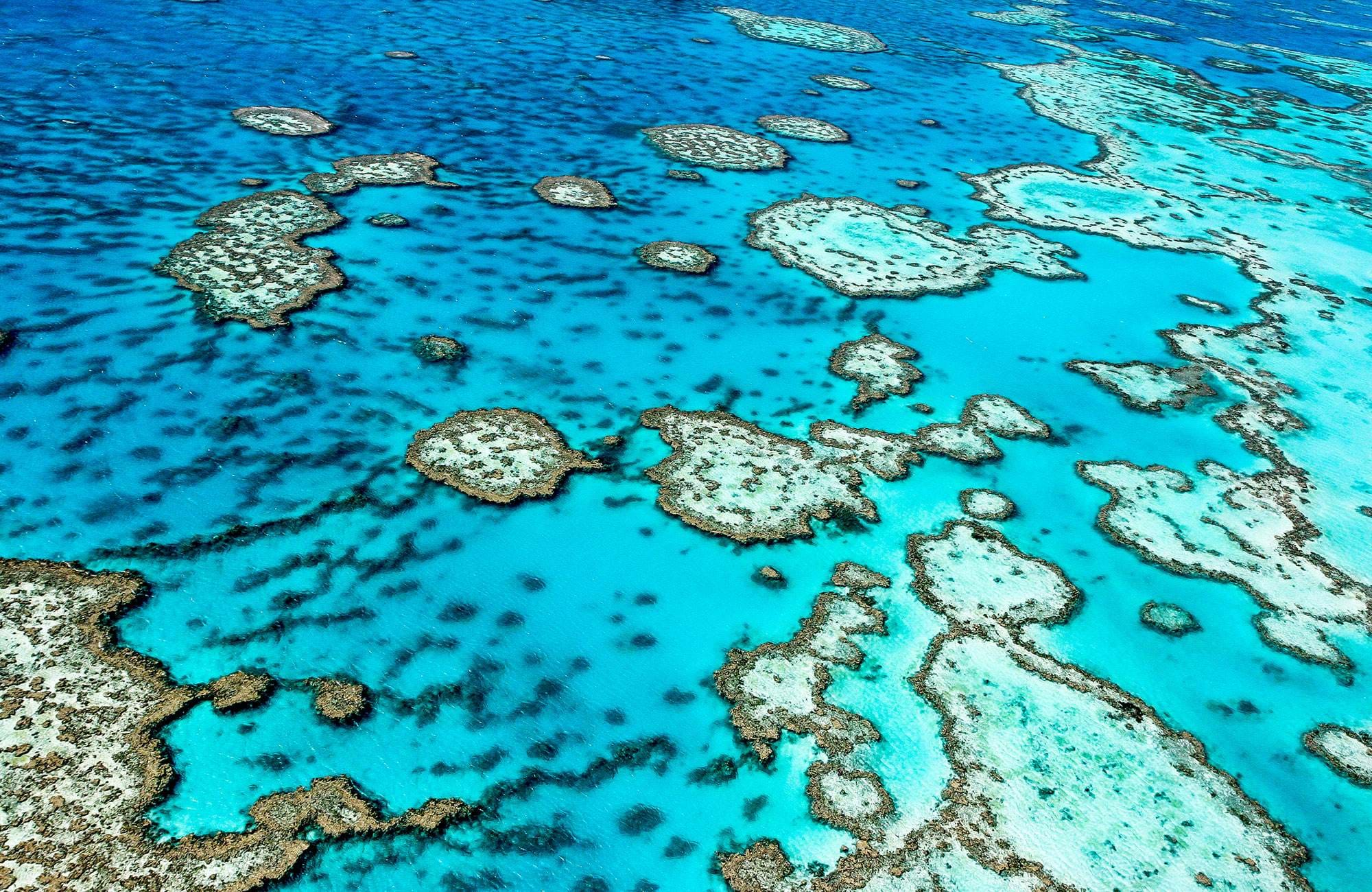 koraller i Great Barrier Reef i Australien