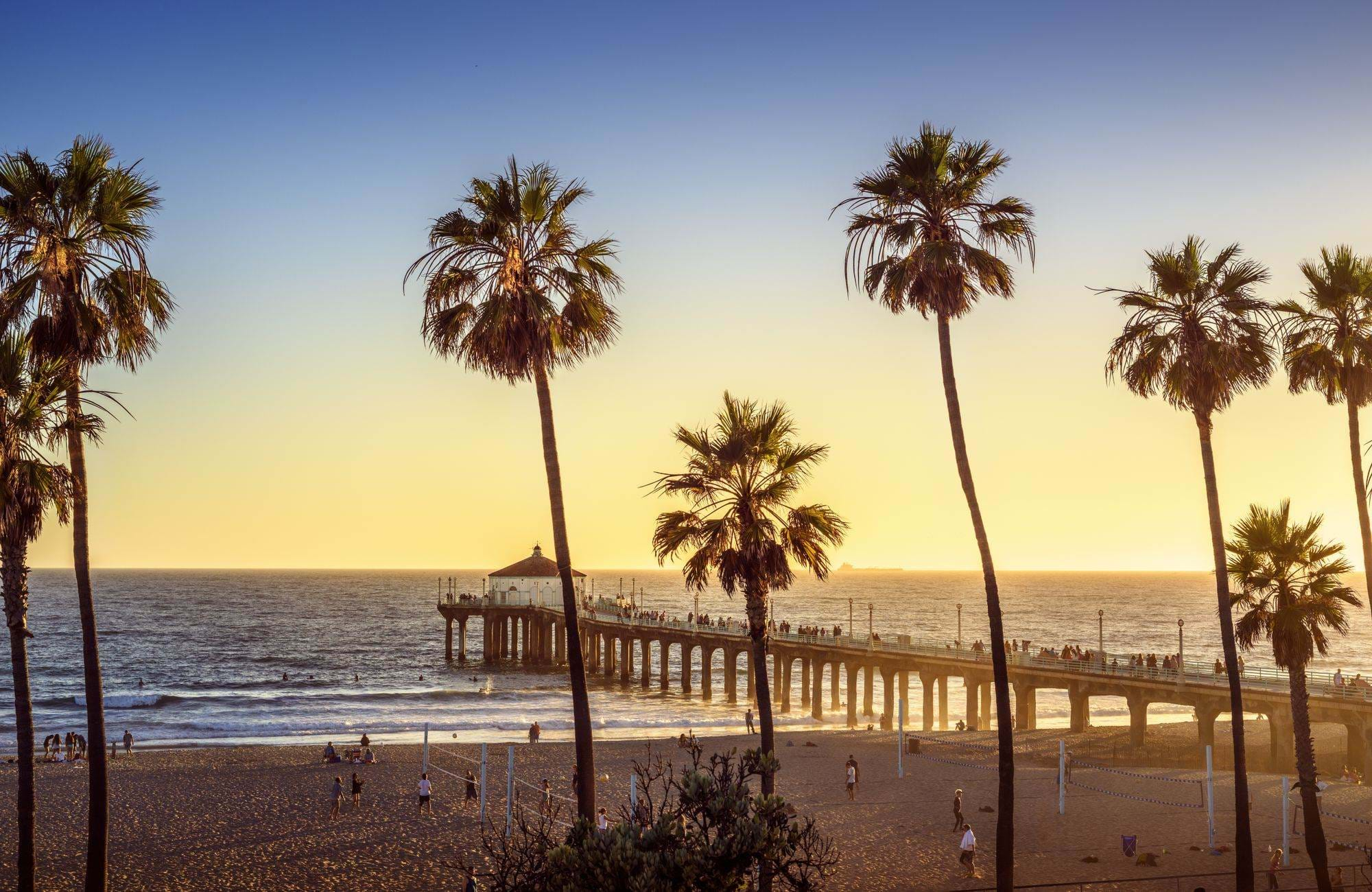 los-angeles-west-coast-palm-trees-cover