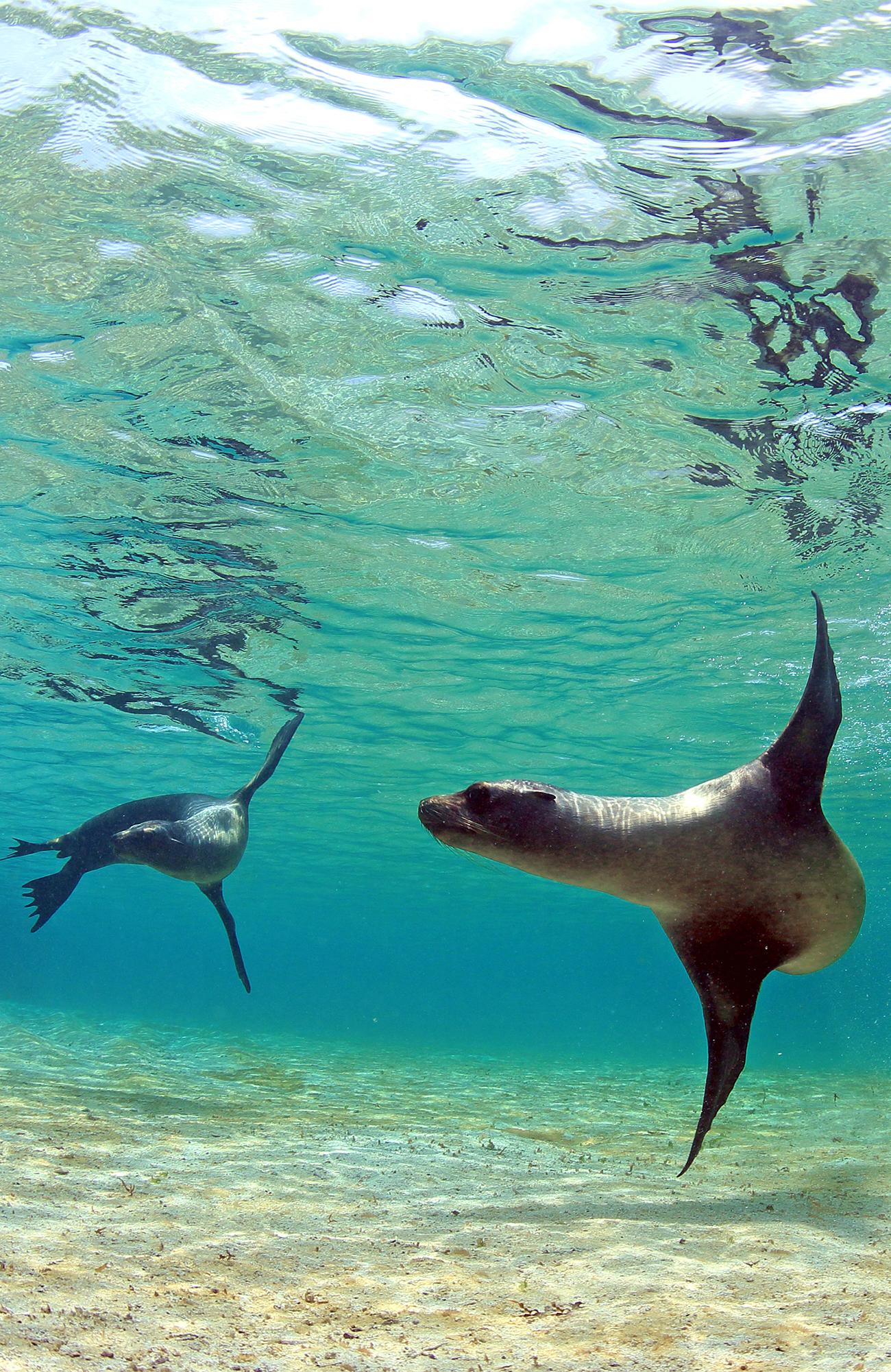 rejser til galapagos