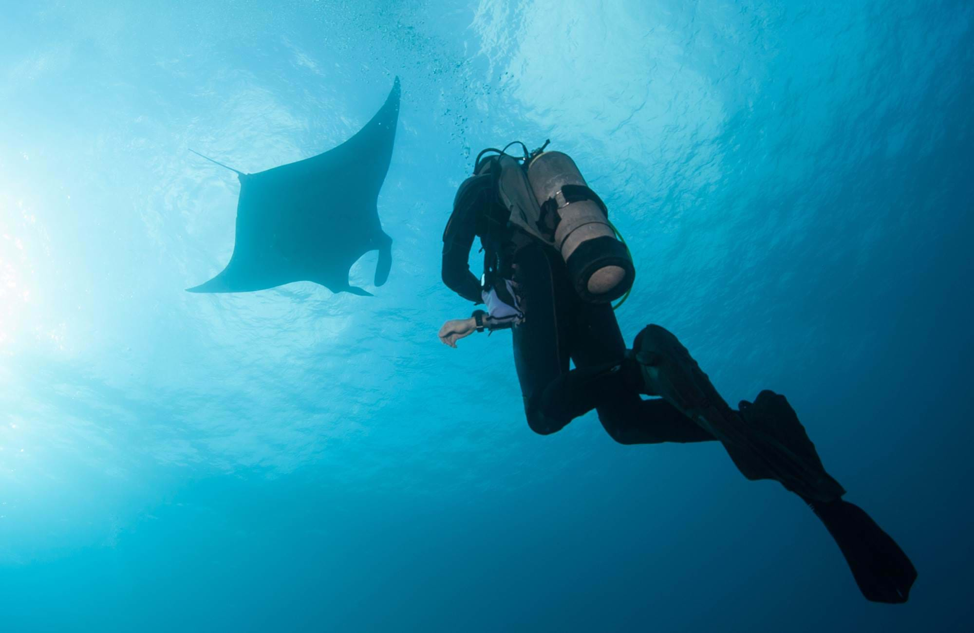 diving-manta-ray-cover