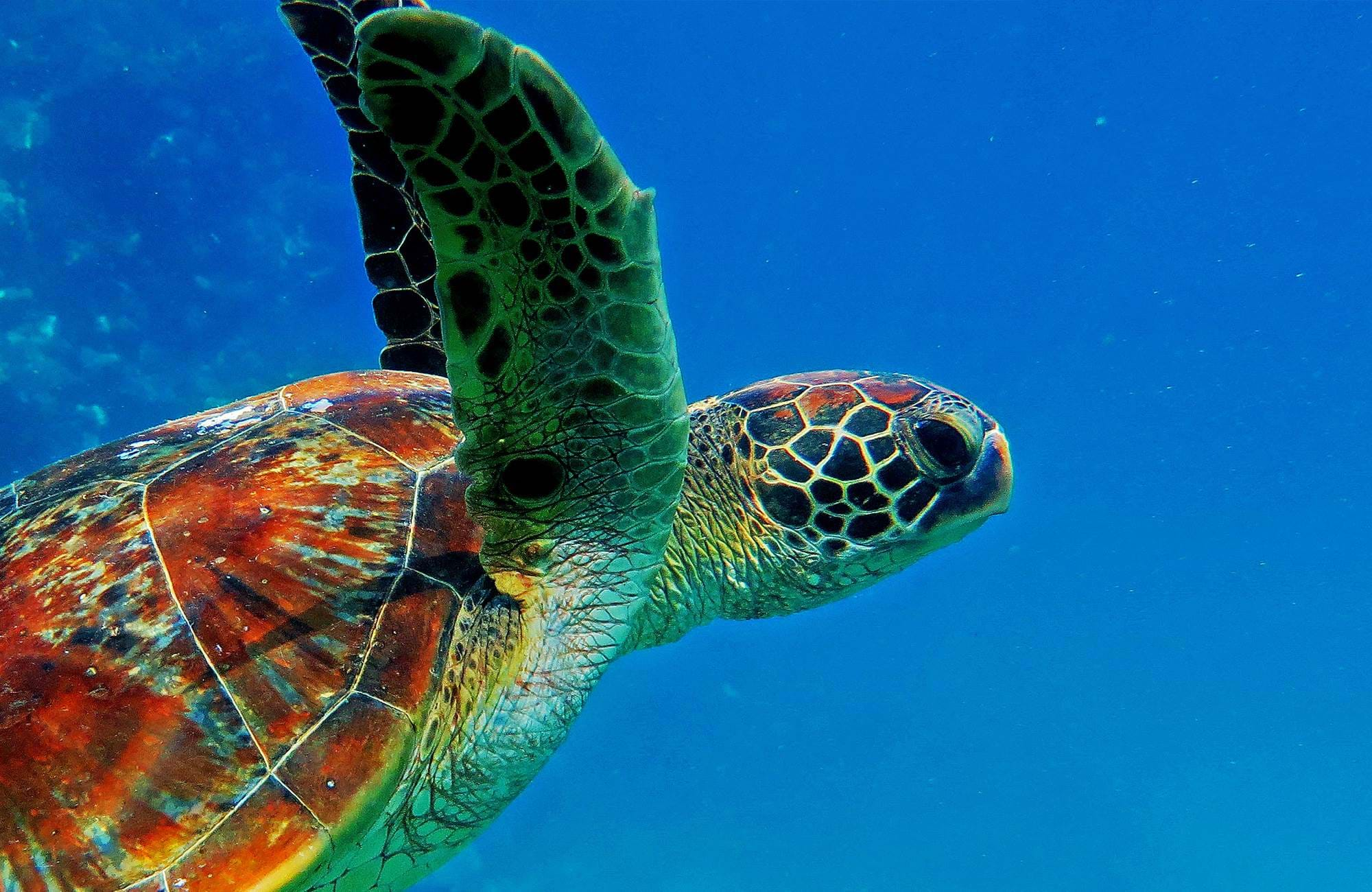 great-barrier-reef-australia-green-sea-turtle