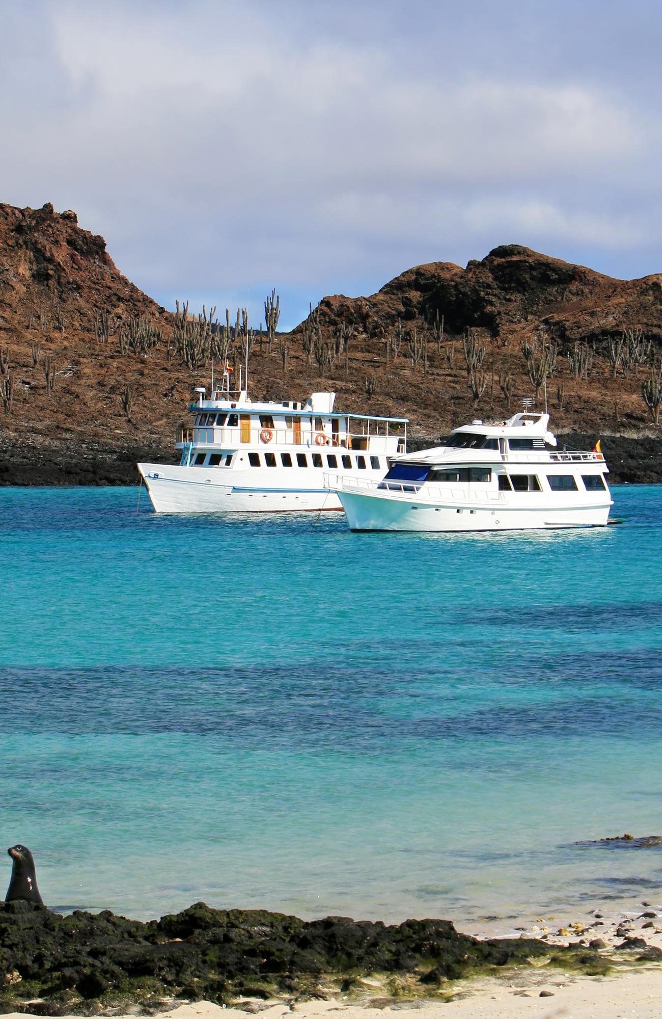 Rejser til Galapagos øerne | Dyrelivet på Galapagos | KILROY