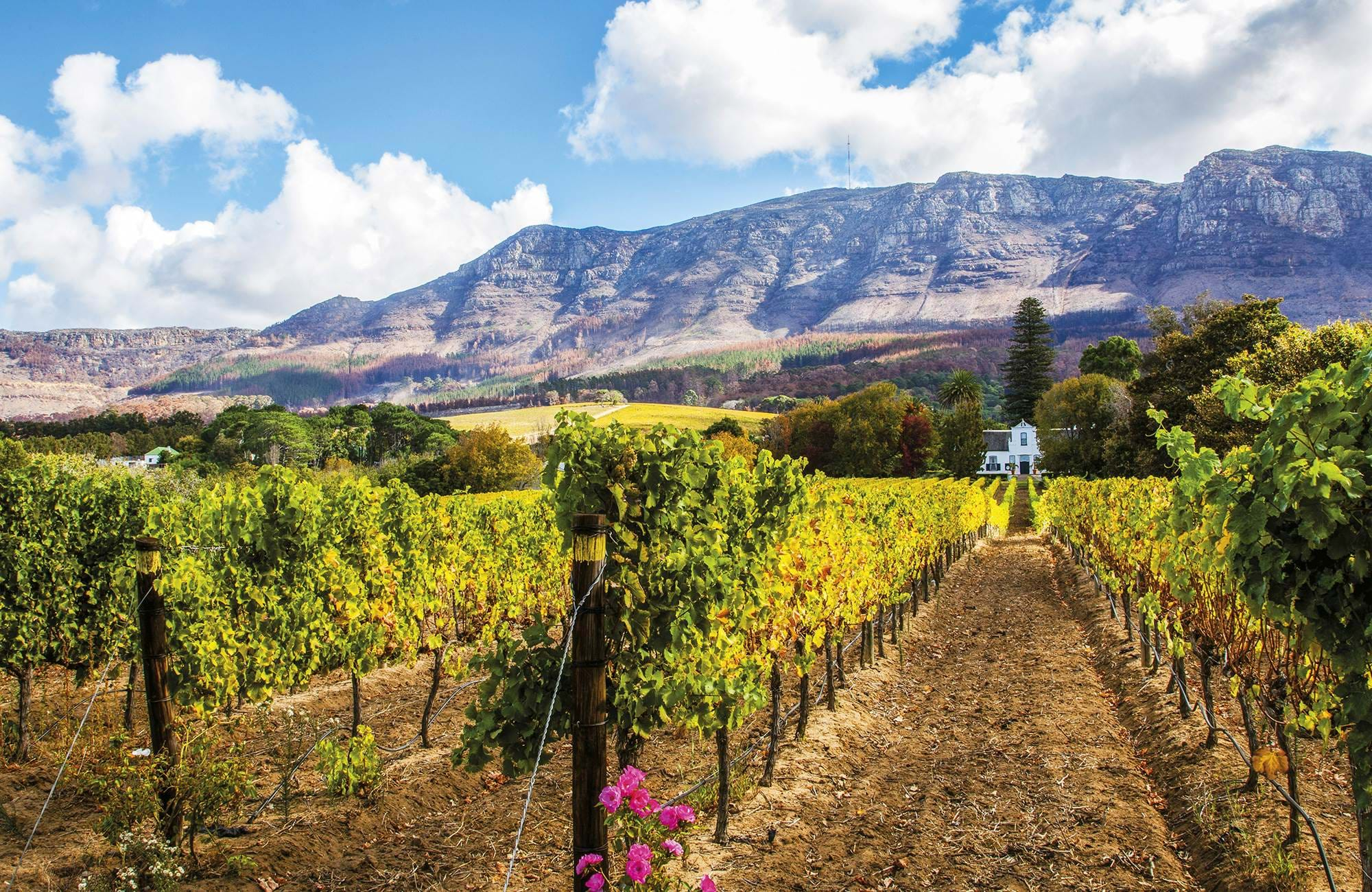 cape-town-south-africa-wineyard