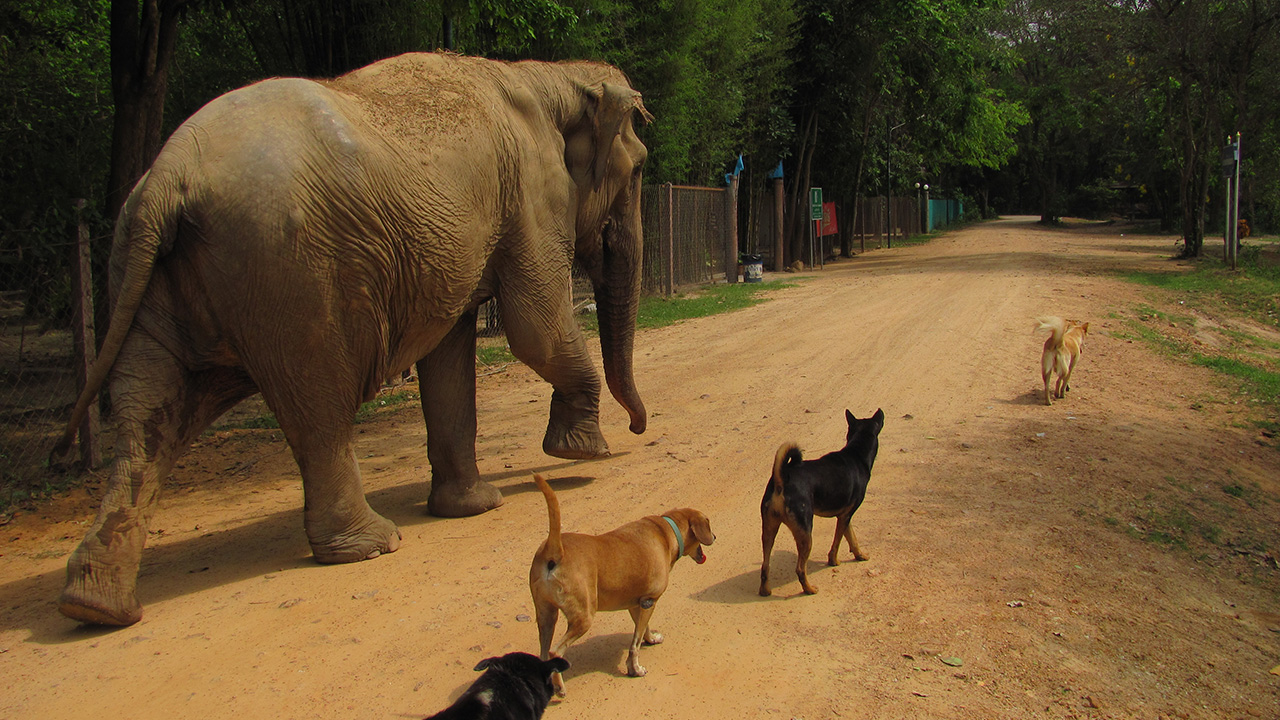 frivilligt arbejde med dyr i udlandet gratis