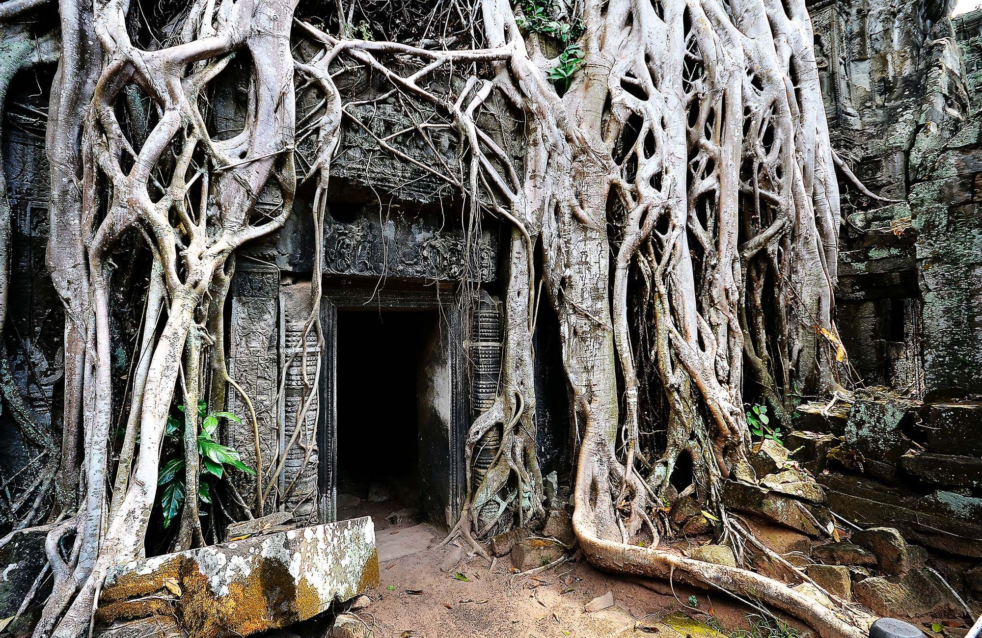 angkor-wat-cambodia-old-trees-cover