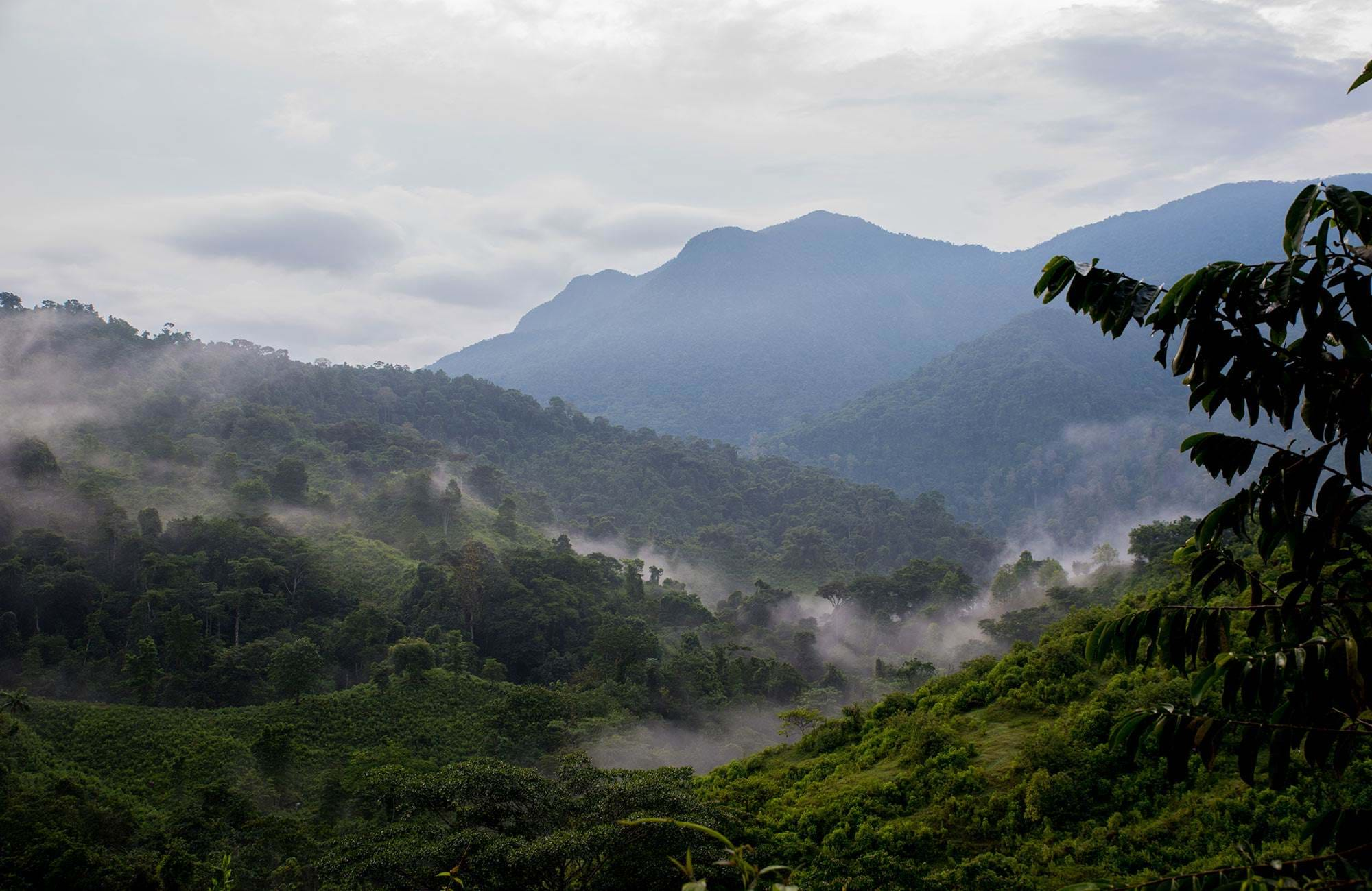 south-america-colombia-lost-city-trek-lookout-jungle
